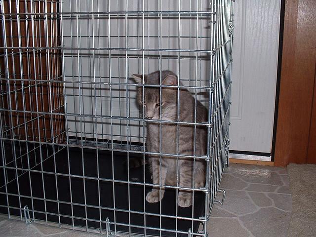 Tuin Afzetten Kat : Agressie tussen katten archives negen levens