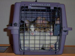 twee katten in een mand