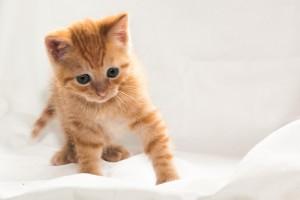 Kitten 5 weken