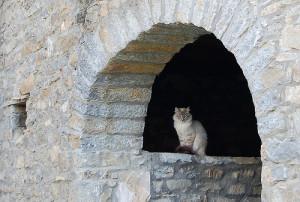 kat in Spanje