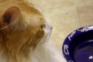 kat met lege voerbak